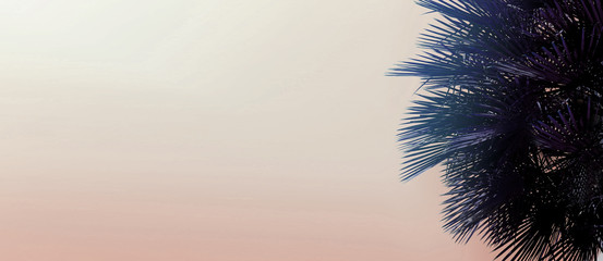 Fotomurales - Website heading and banner with copy space in light pink color and palm tree. Concept of cheap travel agency, summer vacations and tourism, blog header.