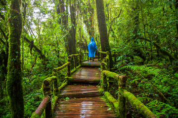 Ang ka nature trail , Rain forest at Doi Inthanon national park , Chiang mai , Thailand
