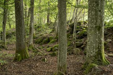 Nordic rainforest