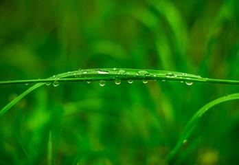 krople deszczu na źdźble trawy