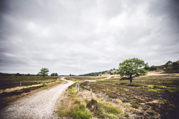 Road going through an area with dry plains