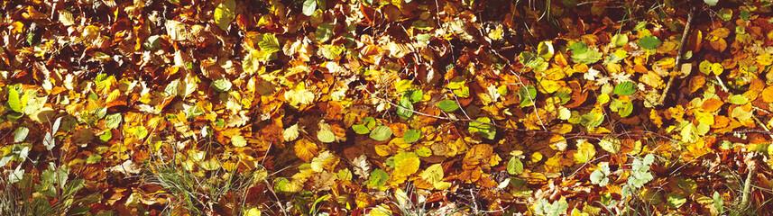 Autumn leaves en various warm colors in the sun