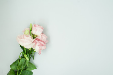Flowers composition. Pink rose flowers on pastel blue background. Flat lay, top view, copy space.