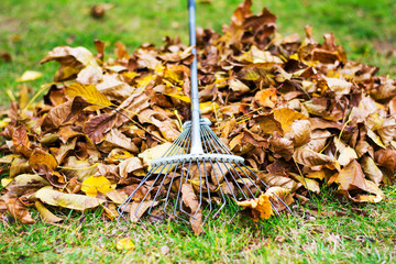 Pile of fallen leafs with a rake for removal