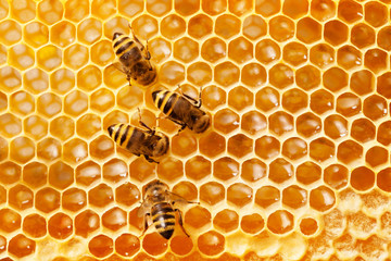 Papiers peints Bee Bees on honeycomb.