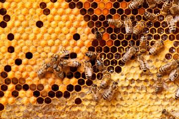 Foto op Textielframe Bee Bees on honeycomb.