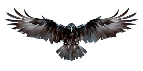 painted colored bird crow in flight in front