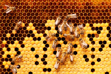 Photo sur Plexiglas Bee Bees on honeycomb.