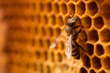 Bee on honeycomb.