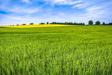 Keuken foto achterwand Pistache Spring farm field with grass, green landscape with blue sky and trees
