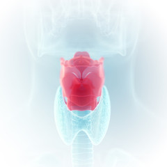 3d rendered medically accurate illustration of the larynx