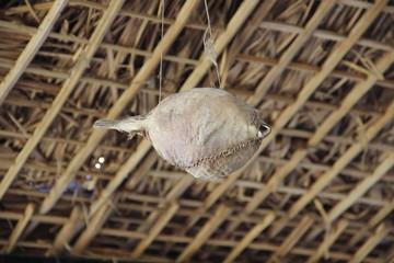Kugelfisch getrocknet