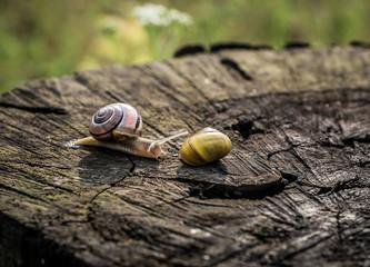 ślimaki na drewnianym tle