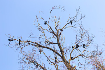 bird of a crow on a tree against the sky