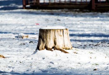 tree stump in winter and snow