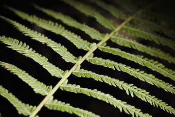 Fern Leaf Branch Abstract Close-up