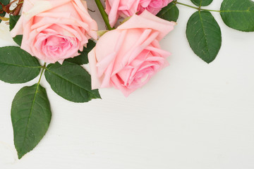 Two Rose fresh flowers on table from above with copy space on desktop, flat lay scene