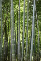 山の公園の竹林の風景2