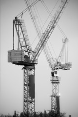 Black and white of Big cranes