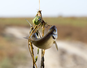 good rest, fish hanging on the hook
