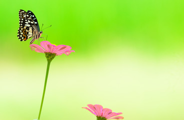 Butterfly and flower On  green background