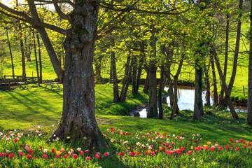 Tulipes près d'une rivière