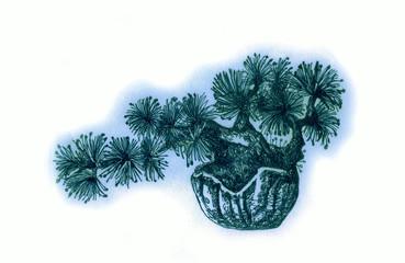 Bonsai, drawing of a small tree.