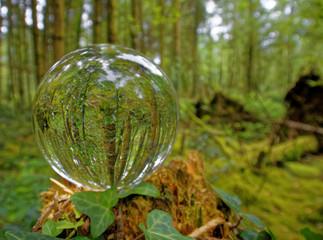Dyffryn Woods through a Crystal Ball