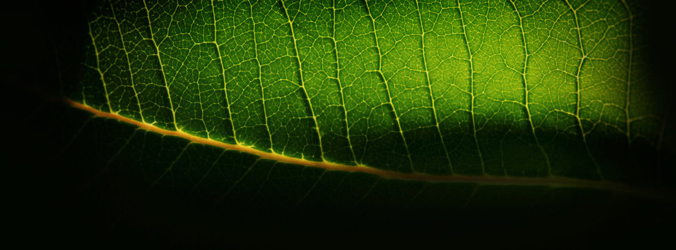 blurred background, green plant leaf and yellow capillaries. Web banner.