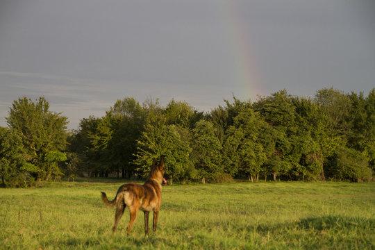 Dog looking at rainbow, dog is blurred, concept of rainbow bridge