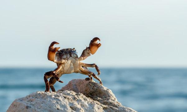crab on wildlife