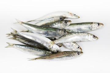 taze balık, sardalya