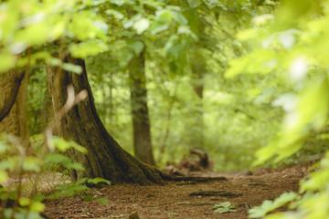 Garden Poster Road in forest Versteckter Weg