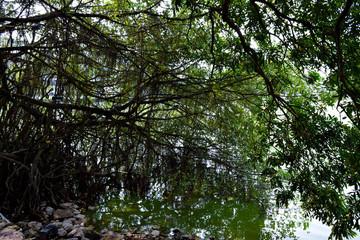 ホアンキエム湖 湖畔