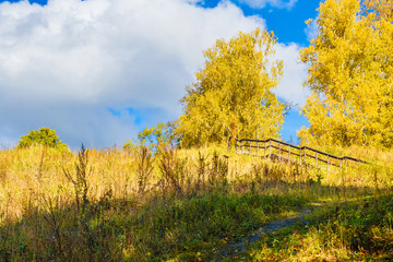 Beautiful autumn forest. Yellow trees against the blue sky