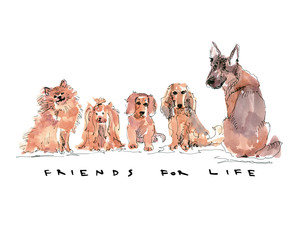 Dogs sitting in a row with text friends for life