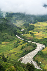 Terraced rice field landscape with river in harvesting season in Y Ty, Bat Xat district, Lao Cai, north Vietnam