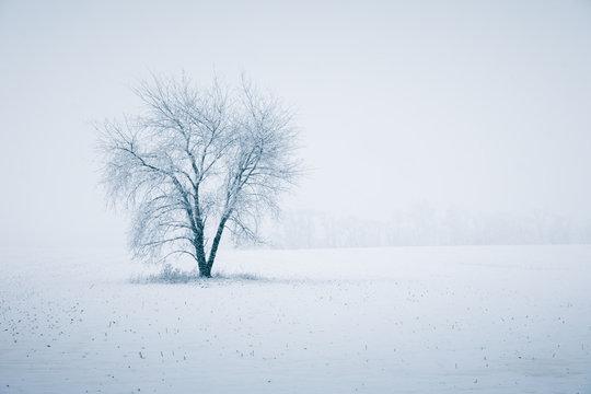 Winter's Beautiful Fury