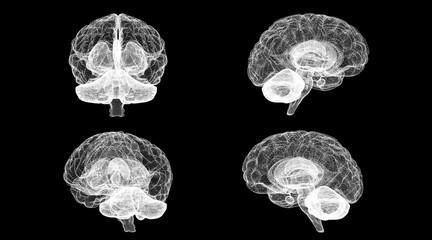 Digital X-ray Brain 3D illustration brain all views