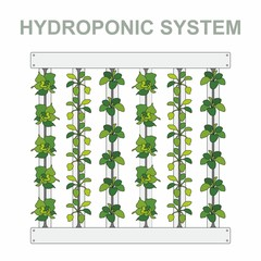 Hydroponic systems, vertical, pipe, plant, water, grow, greenery, modern technology, the built environment, roots, leaves, photosynthesis, root system, lighting, agriculture, nutrients, lettuce leaves
