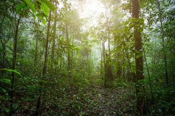 Tropical Rainforest Landscape foggy weather at Phuhinrongkla National Park Nakhon Thai District in Phitsanulok, Thailand.