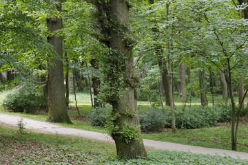 Pathways through the park in Kolobrzeg
