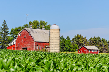 A Minnesota Farm From a Corn Field