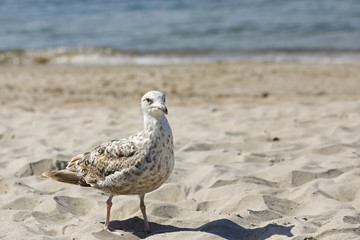 There is a seagull on the sand near the sea shore