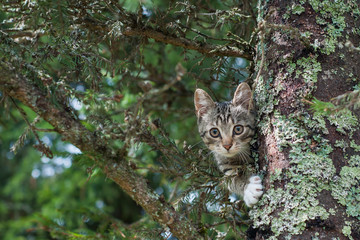 Cute cat is lying on the tree ,Little kitten on a branch ,Cute pets have three colors on a natural green background ,The eyes of mammals are looking.