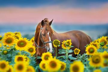 Obraz Red stallion in bridle portrait in sunflowers - fototapety do salonu