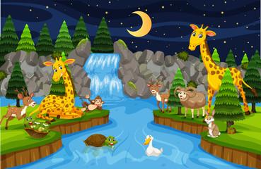 Animals at waterfall night scene