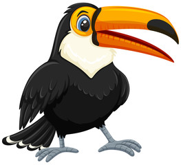 A toucan on white backgroud