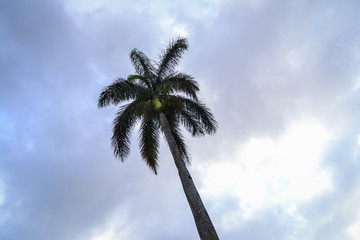 Lonely palm tree with cloudy sky background