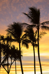 Vertical Palm Trees in Silhouette Against Sunset Clouds in Pink and Yellow